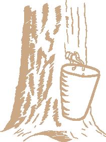 maple-tap-02